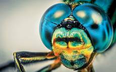 """The dragonfly's eye has 30,000 individual lenses."""